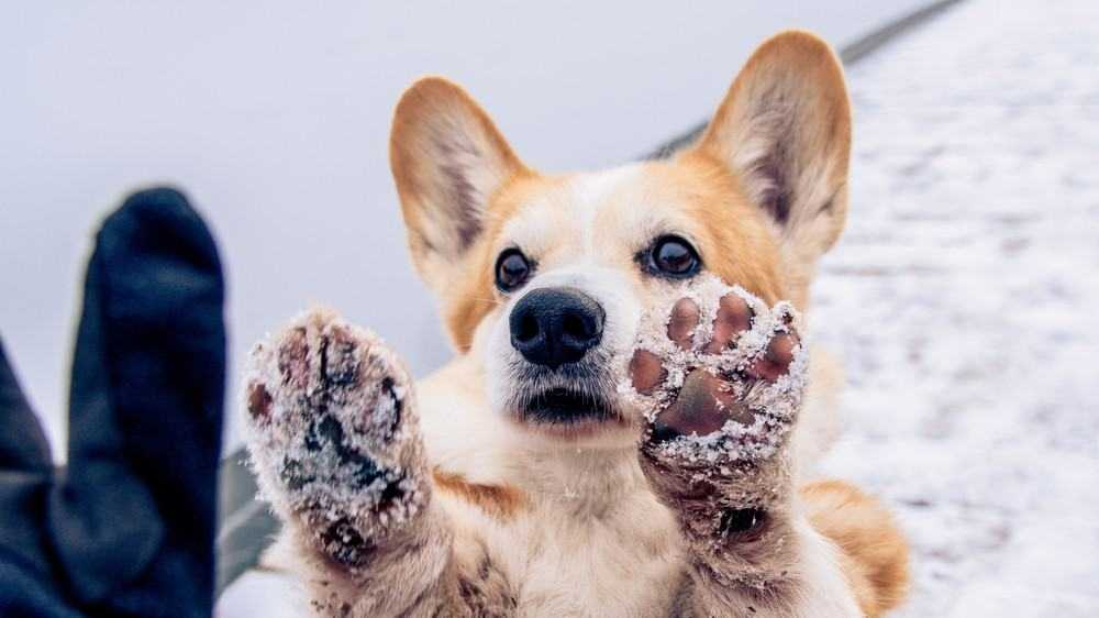 Dog Training Tips You Should Definitely Try Out! 18