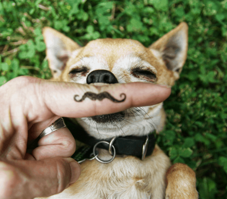 How To Train Your Chihuahua -