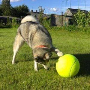 Giant Tennis Ball For Pets -